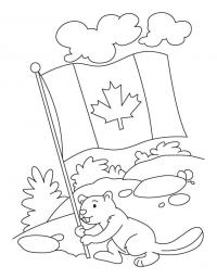 Beaver holds Canadian flag