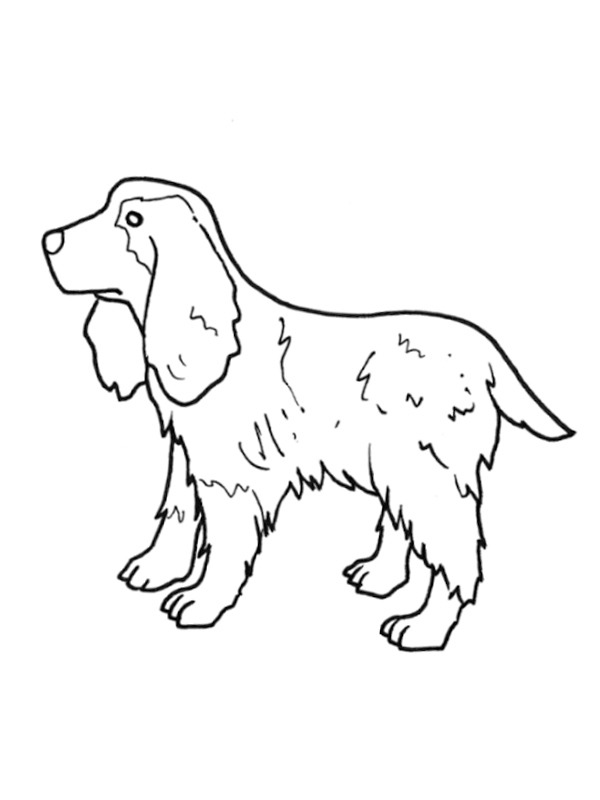 coloring page English Cocker Spaniel