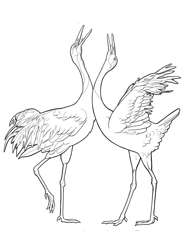 coloring page Common crane